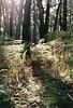 Winter bush walks (Katie Tarpey) Tags: winter bush victoria australia ferns trees light sun afternoonsun nature exploring foraging film 35mm agfa agfavistaplus400 nikonfm10 nikkor50mm14