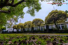 Chung-Hsing New Village, Taiwan 中興新村 (老莫之影 (Morris)) Tags: 南投 台灣 tw 中興新村 nikon ngc nantou taiwan 眷村 巷弄 阿勃勒 yellow