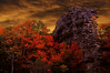 pinnacle_rock (cathead77) Tags: westvirginia wv mercercounty pinnaclerock