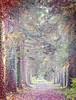 Herfst Osbroek (04) (Johnny Cooman) Tags: aalst vlaanderen belgië bel erembodegem natuur herfst ベルギー flemishregion flandre flandes flanders flandern belgium belgique belgien belgia autumn flora bélgica aaa flhregion panasonicdmcfz200 oostvlaanderen eastflanders bos forest forêt wald bosque otoño herbst automne tree boom baum arbre thegalaxy