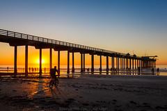 Busy shore (binzhongli) Tags: sunset pier lajolla scrippspier bridge beach shore ocean westcoast coast coastline binzhongphotography binzhong