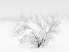 Mist on the mire II (Fjällkantsbon) Tags: brännåker evamårtensson gitsfjälletsnaturreservat lappland sverige dimma november västerbottenslän mist mire minimalism vinter winter