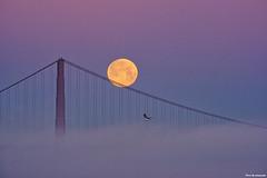 Moonset (davidyuweb) Tags: moonset moon full fullmoon goldengatebridge golden gate bridgelow foglucky snapshot sfist