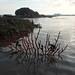 Living rocky shore at Pulau Ubin