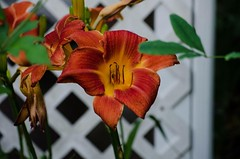 Flowers in July (2013) (The ADHD Photographer) Tags: garden flowers nature outdoors summertime july flower