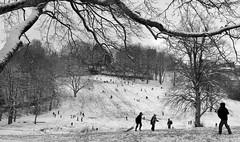 SundayMorning (Tony Tooth) Tags: nikon d7100 tamron 2470mm people park broughpark snow snowy wintry december bw blackandwhite monochrome sunday sundaymorning leek staffs staffordshire