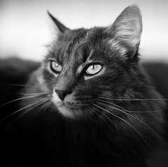 Bruzzu (Bildo M) Tags: leica leicaq nb bw chat animaux portrait