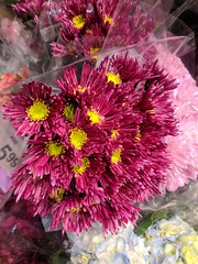 IMG_20171210_171711 (earthdog) Tags: 2017 googlepixel pixel androidapp moblog cameraphone shopping grocerystore store safeway flower plant needstitle