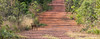 Brasilia Botanical Garden (Cristofer Martins) Tags: brasiliabotanicalgarden brasília botanicalgarden veadocatingueiro road mazamagouazoubira graybrocket coth5