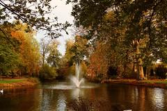 Autumn Pond (Daphne-8) Tags: farben colors colours colores autumn herbst trees bäume arbres arboles otoño autunno outono árvores bomen herfst kleuren forest estanque étang bassin stagno lagoa vijver pond water aqua agua wasser