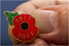 Macro Mondays – Fingertips (Kev Gregory (General)) Tags: macromondays fingertips finger 2017 1917 poppy royal british legion rbl appeal november remembrance armed forces community support supporting fundraising bokeh kev gregory canon 7d macro mondays 100 100mm f28 usm ef challenge theme