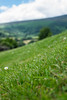 How Green is my Valley (not.far.from.here) Tags: green southwales llanthonypriory monmouthshire greengrass fujifilmxt1