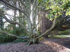 Carnfunnock Country Park. (Sal Lim) Tags: carnfunnock country park coantrim trees woods gardens