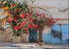 Bougainvillea (mhobl) Tags: tã¼renundtore sidiifni bougainvillea plants maroc morocco colors blue door türenundtore