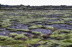 20130816-141436-Iceland (vdirenko) Tags: europe iceland moss