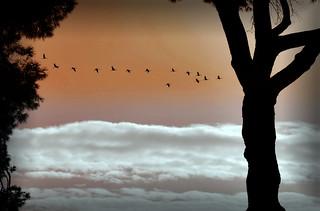 Fenicotteri sui cieli di Roma (un segnale di speranza?)
