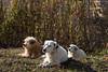Guardians (stefanobosia) Tags: dogs pets guardians formation cani animali nature natura 1300d 50mm