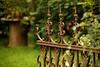 Schmiedekunst (Pittiplatsch der Große) Tags: zaun garten garden usedom deutschland germany oldstuff geschmiedet norddeutschland gartenkunst schmiedekunst fence ironfence zecherin