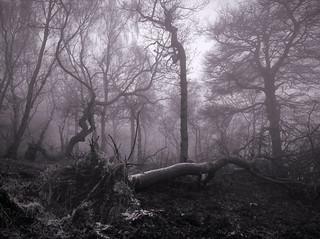 The death of Treebeard