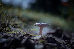 Feeling lonely (ursulamller900) Tags: trioplan2950 mushroom pilz bokeh dark mygarden