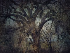 Majesty (katezariroberts) Tags: trees stackables