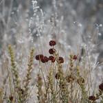 Brush in Topanga State Park - California thumbnail