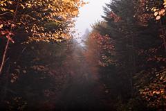 La forêt by francois ollivier -