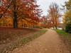 Virginia Water in Autumn-EB160377 (tony.rummery) Tags: autumn autumncolours em10 mft microfourthirds omd olympus path surrey trees virginiawater runnymededistrict england unitedkingdom gb