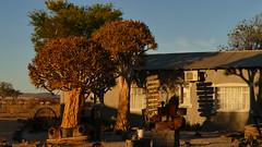 im Licht der untergehenden Sonne (marionkaminski) Tags: sunset namibia afrika africa tree arbre arbol gegenlicht landscape paisaje paysage baum köcherbaum auto coche car sonnenuntergang dämmerung panasonic puertedelsol coucherdusoleil lumixfz1000