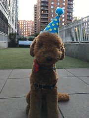 Ruby Red's Tucker...best Barkday ever!