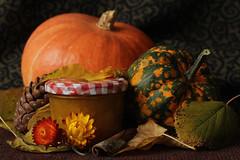 pumpkin jam (notpushkin) Tags: pumpkin jam stilllife stillleben kürbis marmelade autumn fall herbst food zierkürbis homemade