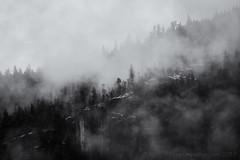 Foggy forest Squamish --4 (tristanrayner.com) Tags: green blackandwhite bw fog mist fall autumn winter seasons rain clouds pnw bc british columbia squamish