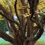 "Cincinnati – Spring Grove Cemetery & Arboretum ""Tree Trunk Entanglement"" thumbnail"