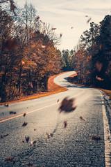 Autumn Road (ashercurri) Tags: autumn fall road curve leaf leaves sony nex nex7