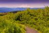 MyViewofMountHood (stayawake68) Tags: mounthood nature hikking traveling wildeness perfectview forest