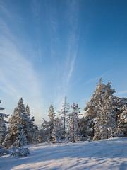 Nuages légers (sosivov) Tags: sweden snow landscape sky blue trees forest