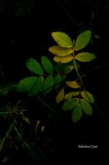 Landing-6 (Samtian) Tags: leaves fall explore explored