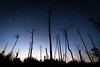 Eternal Sky (Nicolas Hyvoz) Tags: sky stars pentax mimizan france autumn seaside atlantic trees branches blue cosmos etoiles estrellas deadtrees