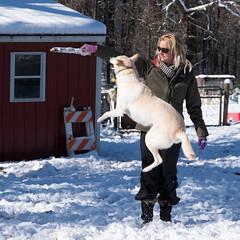 Greta's Jump (Patrick Whittington) Tags: alabama snow germanshepherd agility pentax