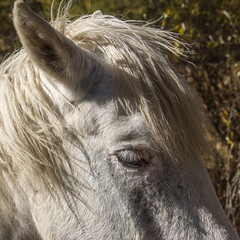 Cheval timide (shy horse) (Larch) Tags: tree cheval horse timide shy nature dehors outside froid cold matin morning impressionné impressed oreille cil eyelash crinière mane ear regard expression ombre shadow