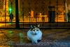Kedi (alperenuslu) Tags: cat kedi tcdd gar balıkesir animal demiryolları türkiye