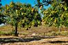 Ice the Dog guarding the family chestnut grove in Penela da Beira (Viseu, Portugal) (Gail at Large | Image Legacy) Tags: 2017 peneladabeira portugal castanhas chestnuts gailatlargecom