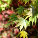 """Westonbirt Arboretum • <a style=""""font-size:0.8em;"""" href=""""http://www.flickr.com/photos/84132664@N06/38166585671/"""" target=""""_blank"""">View on Flickr</a>"""