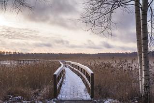 A morning winter walk