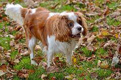 Mot'ka (Caulker) Tags: motka dog park fall 30102017