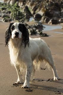 Ye Olde Salty Sea Dog