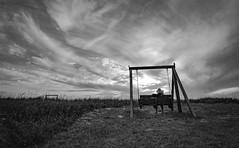 my wife (charlidino) Tags: blackwhite cancerfree florida healing peace sky sunset thankfull wife