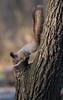 November 9 (ekoloskov) Tags: moskva moscow russia ru krylatskoe krylatskyhills hills landscape frost squirrel tree trees grass ravine pentaxk1 300mm pentax