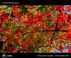 981_D8B_8073_bis_Foglie_Centro_Bonocore (Vater_fotografo) Tags: ciambra clubitnikon cielo controluce autunno fiori foglie fiore foglia sicilia salvatoreciambra colori natura piante nikonclubit nikon ngc ncg