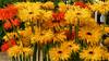 Happy Sunday! (Gertrud K.) Tags: berlin marzahn iga2017 erholungsparkmarzahn gärtenderwelt flowers yellow orange gerbera asteraceae